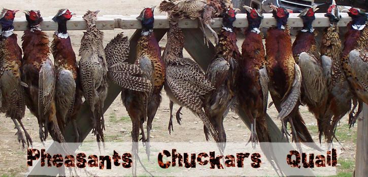 Pheasants Chuckers Quail